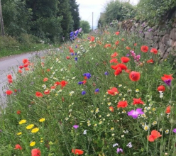 Derbyshire Dales district councillors have voted unanimously to increase biodiversity in the road verges and open spaces the authority manages.