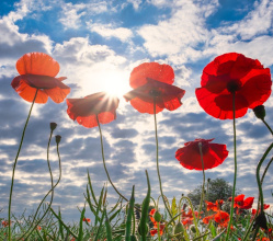 The Government has issued guidance that sets out how Remembrance Sunday activities can take place in line with new COVID-19 restrictions and requirements in England that start on Thursday (5 November).