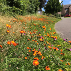 Derbyshire Dales District Council is working with local people to address an alarming decline in wildflowers on local road verges and open spaces.